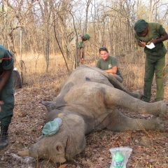 LWC HELPS WITH RHINO TRACKING IN LIWONDE