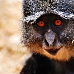 JOIN OUR EXCITING SAMANGO MONKEY RESEARCH PROJECT