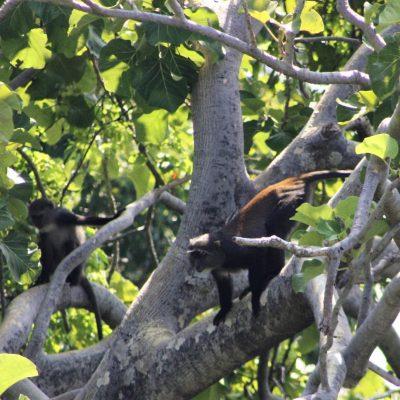 Samango Monkey Research Project