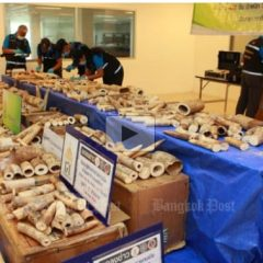 THAILAND IVORY SEIZURE A DISAPPOINTMENT FOR MALAWI