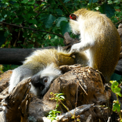 MONKEY BUSINESS AT THE WILDLIFE CENTRE