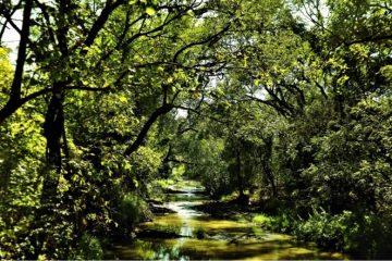 NEW LEGISLATION OFFERS LIFELINE TO MALAWI'S FORESTS