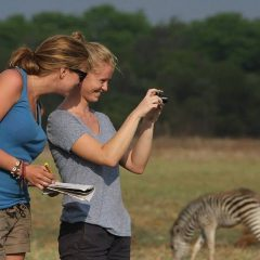 ZEBRA SURVEY AT KUTI